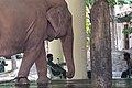 White Elephant Yangon.JPG