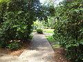 Whitehead Camellia Trail 6.JPG