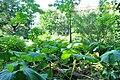 Wikipedia 13. Fotoworkshop Botanischer Garten Erlangen 2013 by-RaBoe 032.jpg