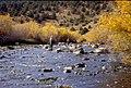 Wild trout project e walker river bridgeport0107 (26249839616).jpg