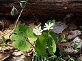 Wildflowers P4100069.JPG
