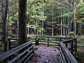 William B Clark Conservation Area Rossville TN 016.jpg