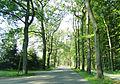 Winkelmoor Allee 2011-08-20 116.JPG