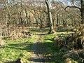 Woodland Walk - geograph.org.uk - 127334.jpg