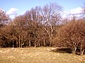 Woodland pasture - geograph.org.uk - 1189673.jpg