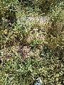 Woynillowicz family hill in Sawiczy - gravestone 6.jpg