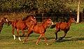 Yavuz At Çiftliği - panoramio.jpg