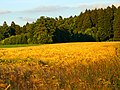 Yellow And Green - panoramio.jpg