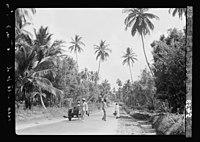 Zanzibar. Motor road bordered by clove trees and stately palms LOC matpc.17661.jpg