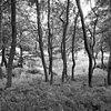 zicht in de tuin - wijnaldum - 20213733 - rce