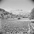 Zicht op het dorp Salt, Bestanddeelnr 255-5124.jpg
