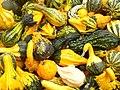 Zierkurbis (Ornamental Pumpkins) - geo.hlipp.de - 29248.jpg