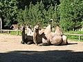 Zoologijos sodas 2007-07-15.jpg