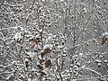 """"""" 13 snowfall in Milan 05.JPG"""