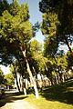® S.D. MADRID PARQUE DEL OESTE - PRADERA DESCENDENTE - panoramio (8).jpg