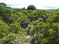 Δάσος Κουμαριάς 5.jpg