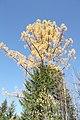 Ёлка, лиственница, осень - panoramio.jpg