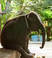 Африканский слон грустит.png