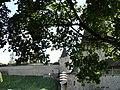Вид на крепостные сооружения города..JPG