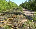 Две дороги - panoramio (2).jpg