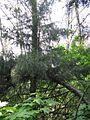 Дендрологічний парк 124.jpg