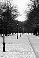 Дендропарк у снігу.jpg
