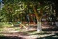 Дитячий майданчик в парку.jpg