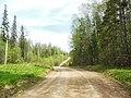 Дорога между полигоном и шоссе, конец мая 2013 - panoramio (1).jpg