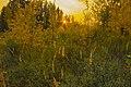 Закат в сосновом бору.jpg