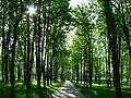 Зелёное солнце - panoramio.jpg