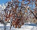 Золотая осень в объятиях зимы (244328265).jpeg