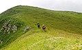Зона альпийских лугов в Кавказском заповеднике.jpg