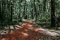 Миљаковачка шума, стаза.jpg