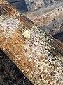Неизвестный гриб в Минске 05.jpg