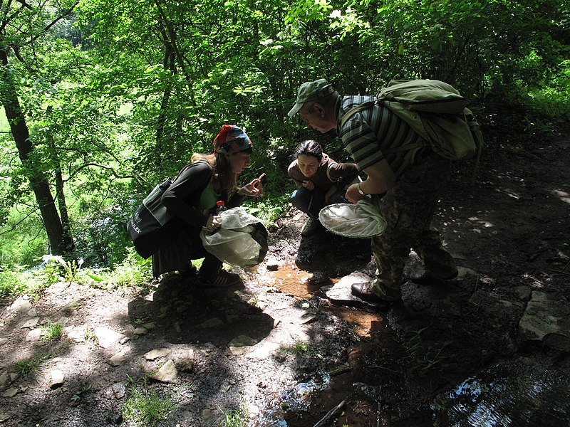 Обстеження водойми у пошуках комах та інших тварин. Фото: Marinka kma, CC BY-SA 4.0