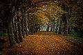 Осінні алеї.jpg