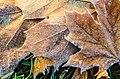 Осінь в дендропарку Олександрія.jpg