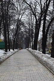 Парк імені Тараса Шевченка DSC 0145.jpg