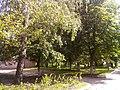 Прилуцький дендропарк Прилуцький район, м. Прилуки, вул. Вавилова, 16 74-107-500 01.jpg