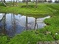 Пруд - panoramio.jpg
