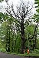 Трускавецький парк 23.jpg
