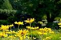 Цветы ботанического сада. - panoramio (1).jpg