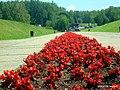 Цветы - panoramio (6).jpg