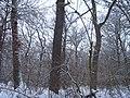 Чернечий Ліс 18.jpg