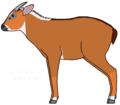 סרו אדום (Capricornis rubibus) - איור של משתמשמנחם.אל.png