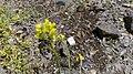 פרח צהוב 1.jpg