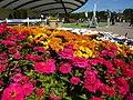 ジニアの花 馬見丘陵公園にて Zinnia, Umami-kyūryō-kōen 2010.10.27 - panoramio.jpg