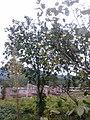 大和 - panoramio (2).jpg