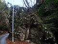 宇賀峡 - panoramio.jpg