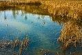 湿地浅滩 - panoramio.jpg
